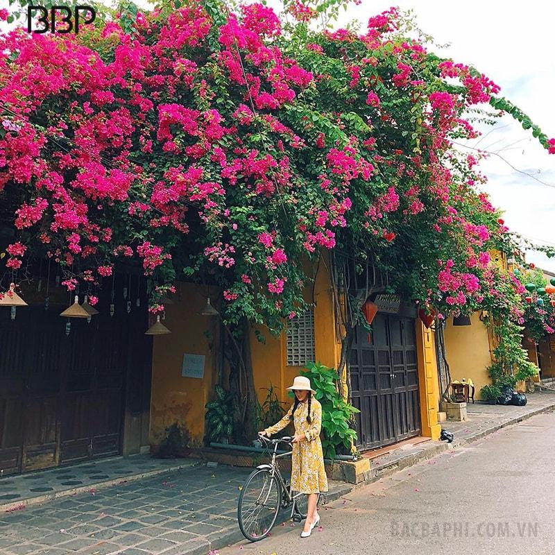 Giàn hoa giấy xinh xắn trước nhà