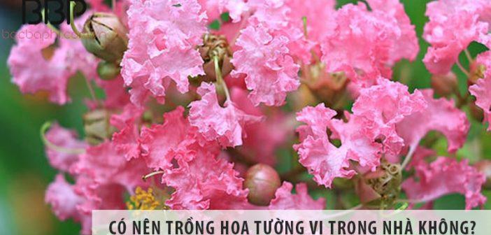 Có nên trồng cây hoa tường vi ở trong nhà không?