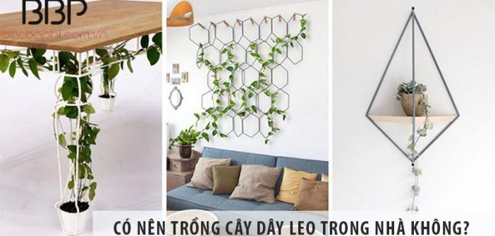 Có nên trồng cây dây leo trong nhà không? Trồng cây nào đẹp?