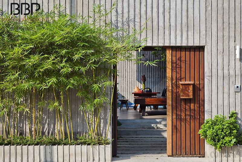 trồng cây trúc trước nhà có tốt không