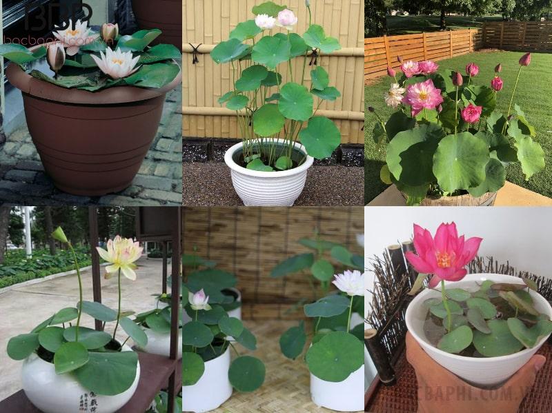 Hoa sen gắn liền với ý nghĩa trong Phật giáo